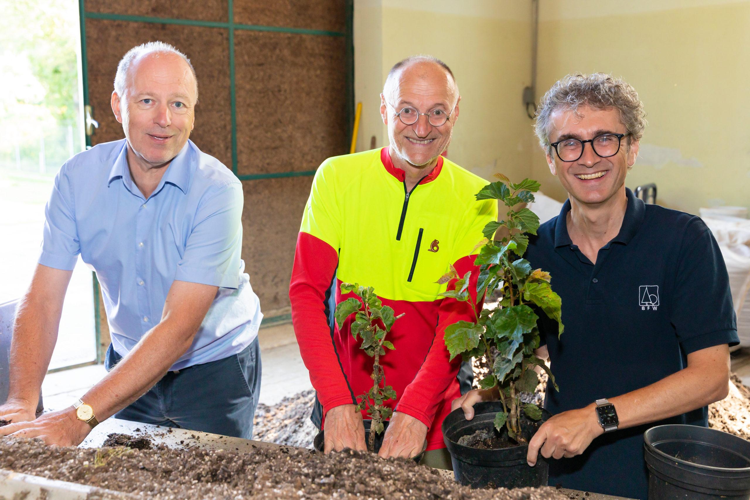 Drei Personen topfen Forstpflanzen um