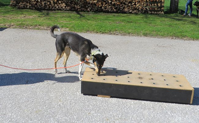 Hund schnüffelt an Trainingsbox