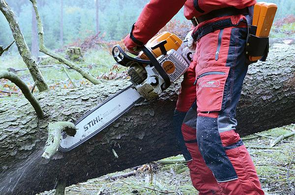 Die schnelle Aufarbeitung von Schadholz verringert die Schäden. (Bild: BFW)
