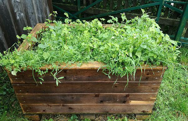 Hochbeet mit viel Gras drauf