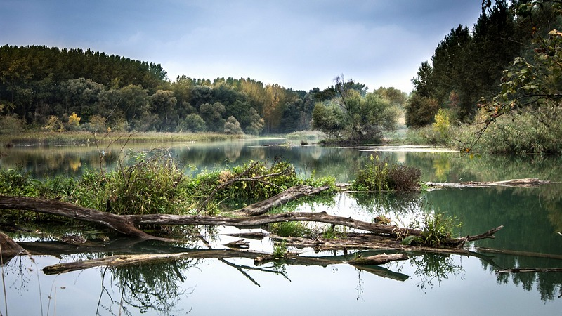 The forests at the Danube are the biggest semi-natural floodplain forest in Central Europe (picture: pixabay).