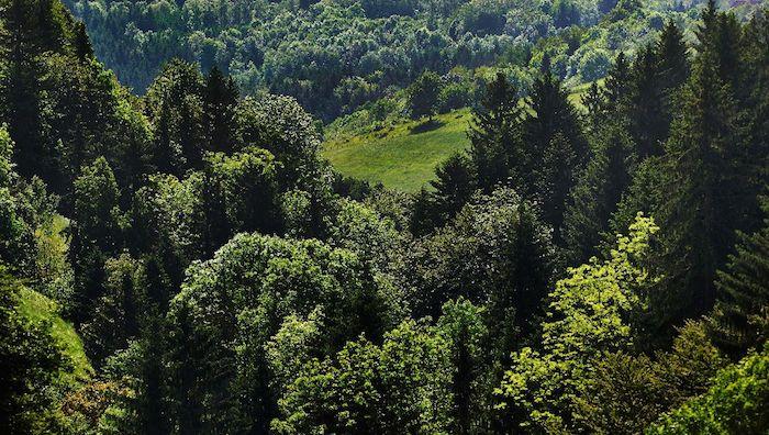 Die Fläche von Laub- und Mischwald nimmt zu.