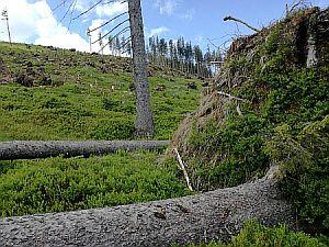Liegender Baum mit herausgerissenem Wurzelteller