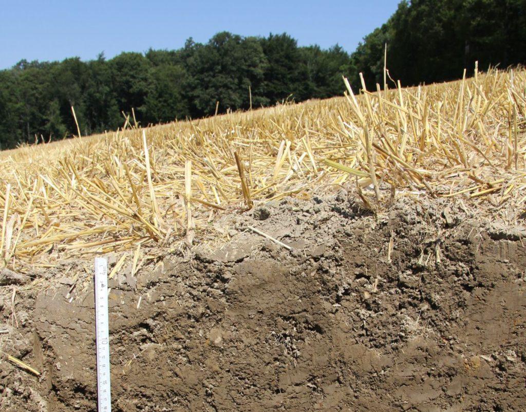 Ackerboden mit abgeschnittenen gelben Gras drauf