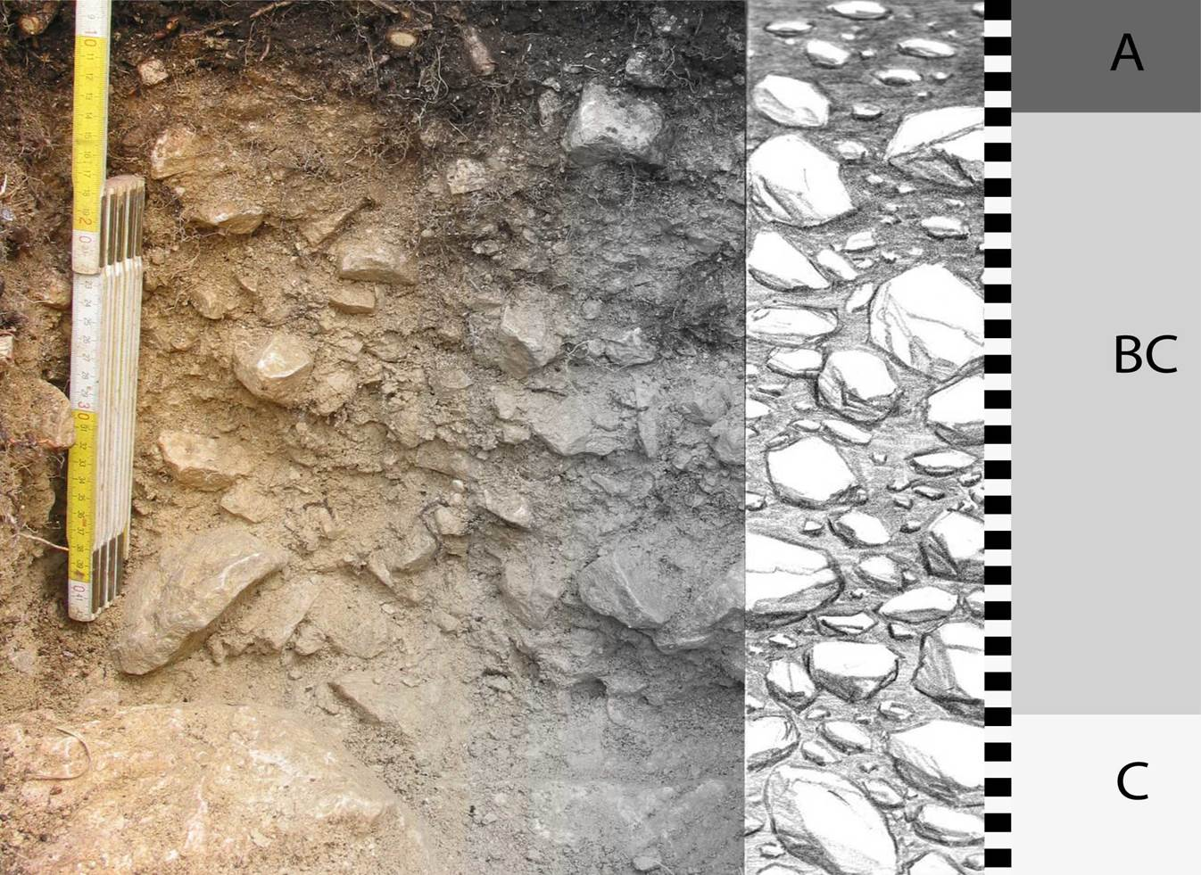 Bodenprofil: links ein Maßstab und ein Boden mit vielen Steinen, rechts schematische Zeichnung in grau