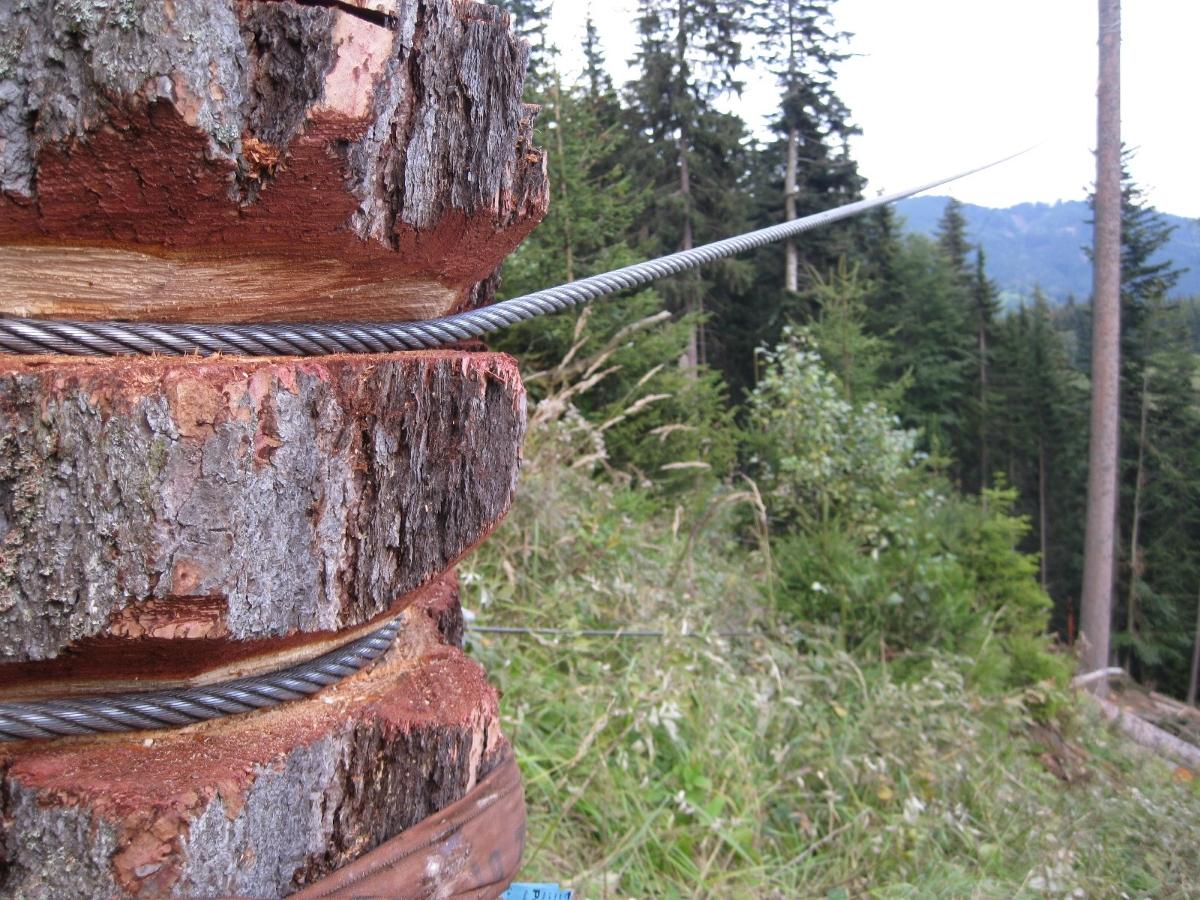 Voranker an einem Baumstamm festgebunden