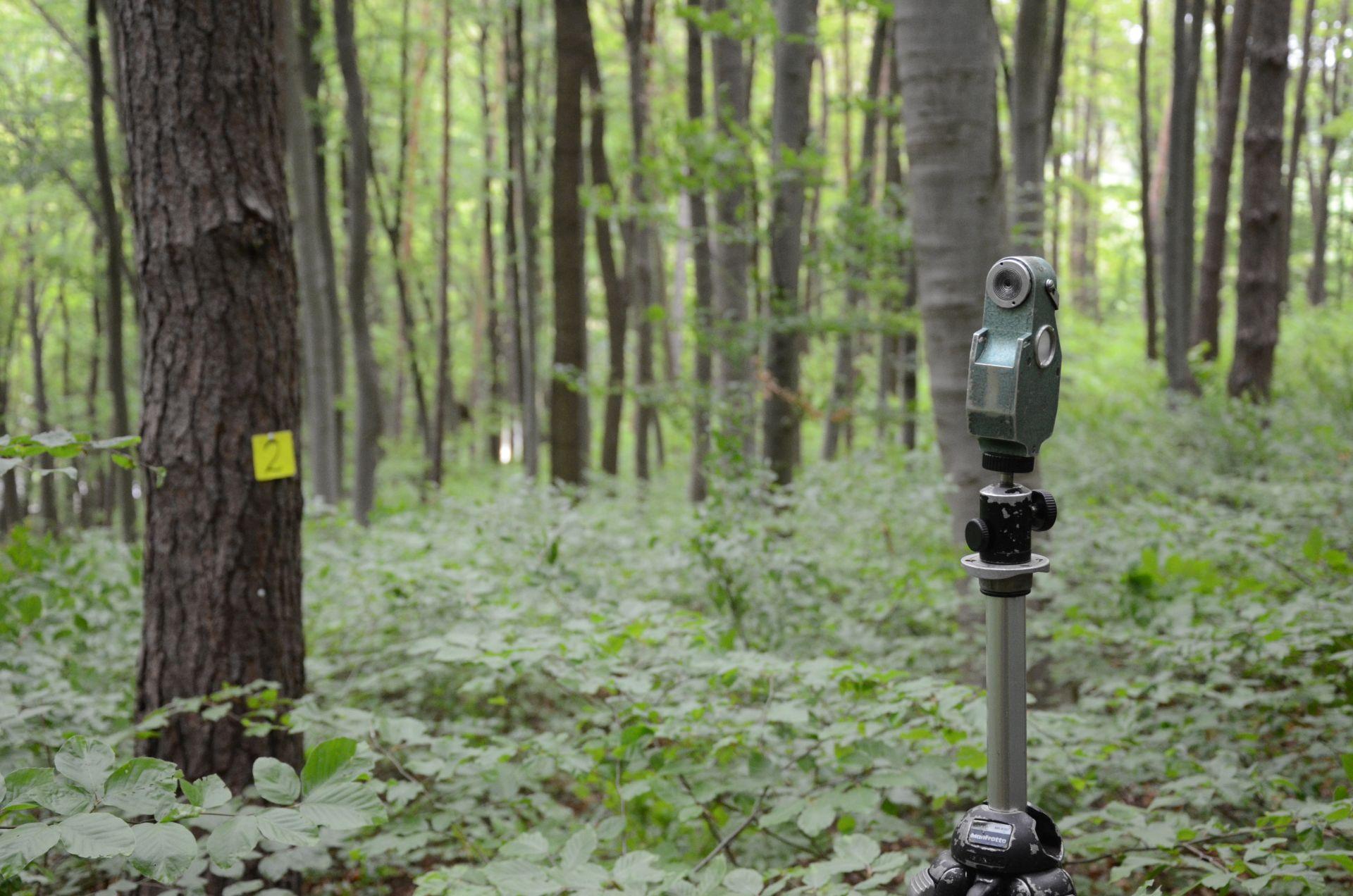 Vermessungsgerät im Wald
