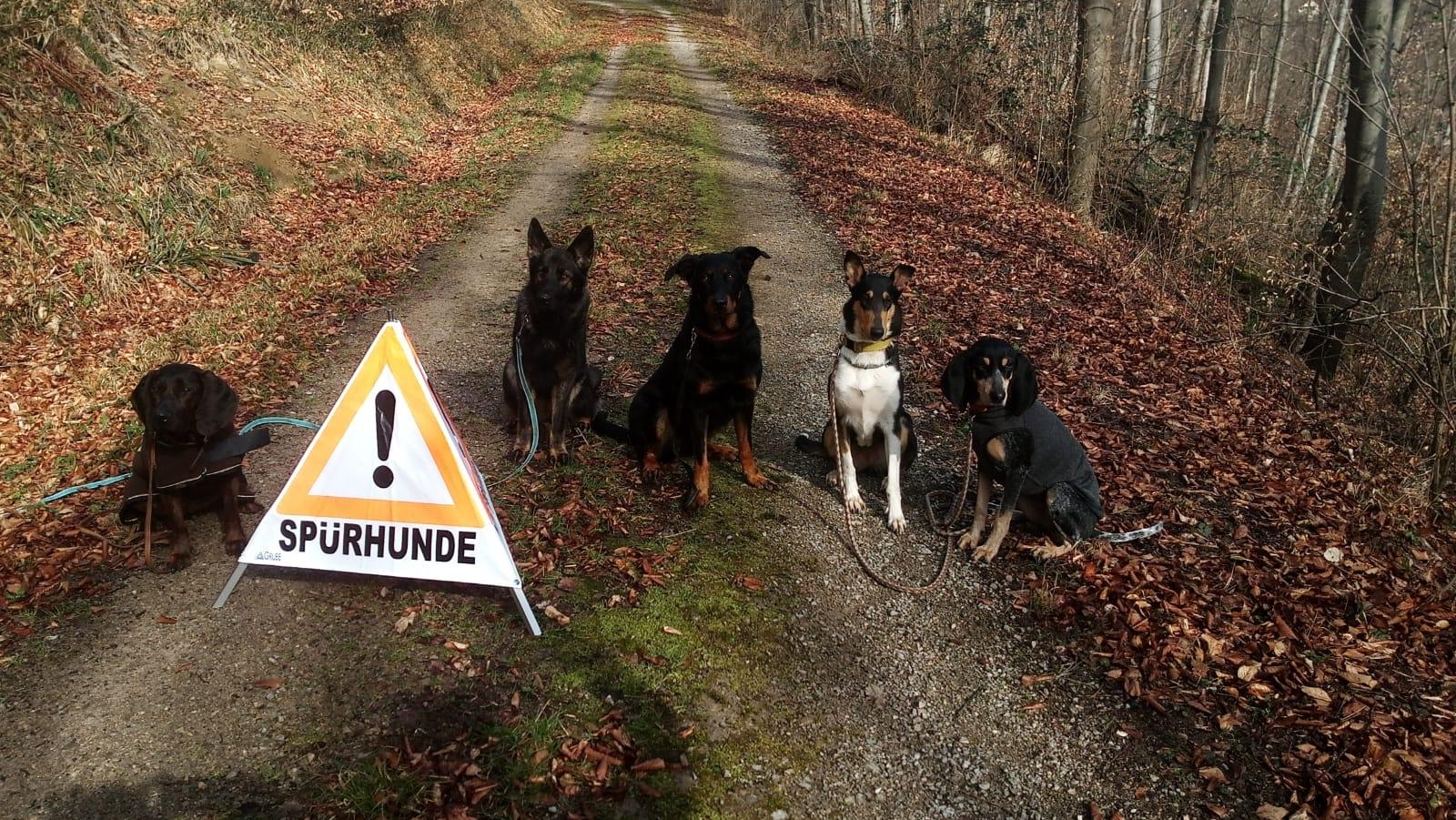 angehende Borkenkäferspürhunde nebeneinandersitzend auf der Forststraße