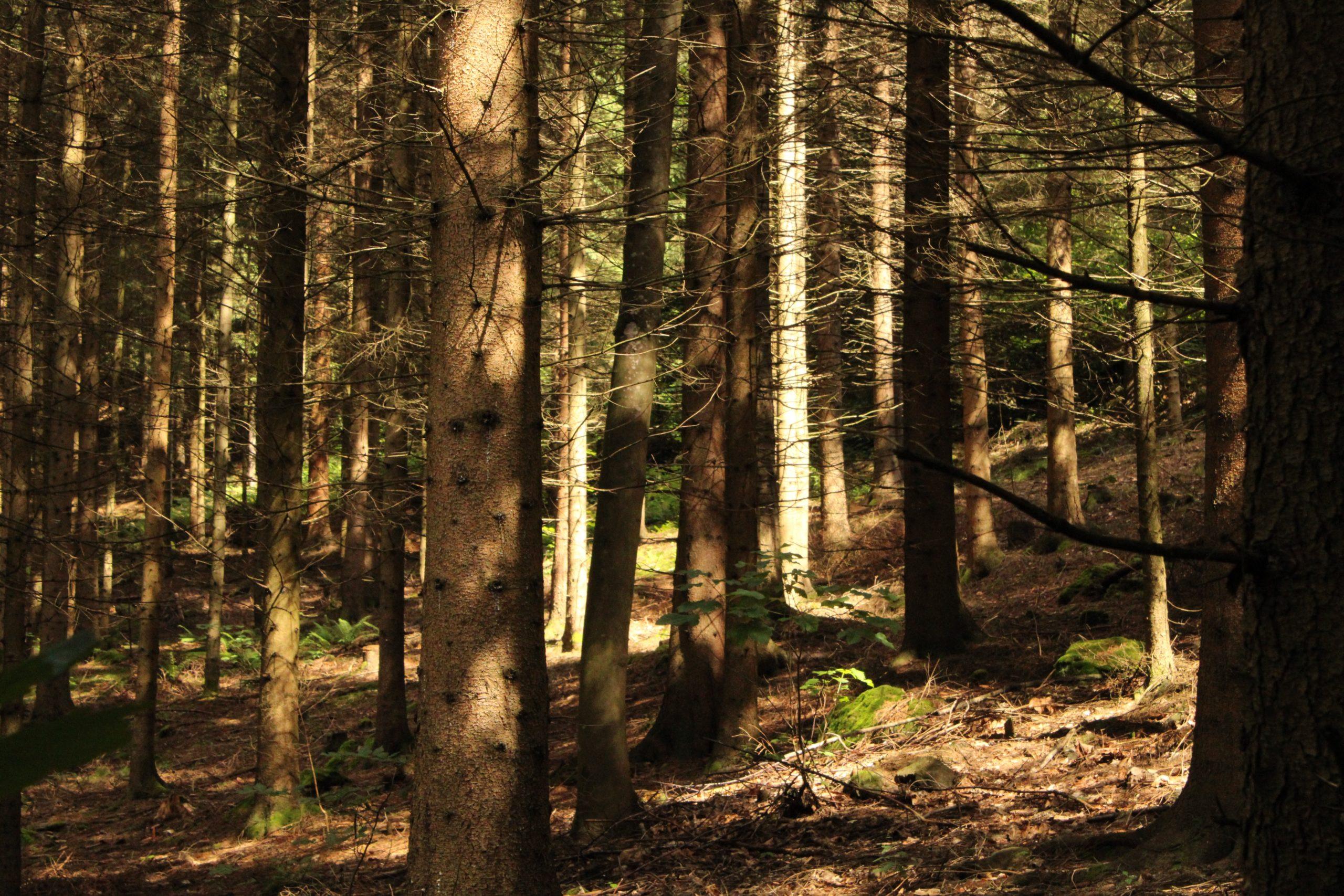 Wald in Serbien