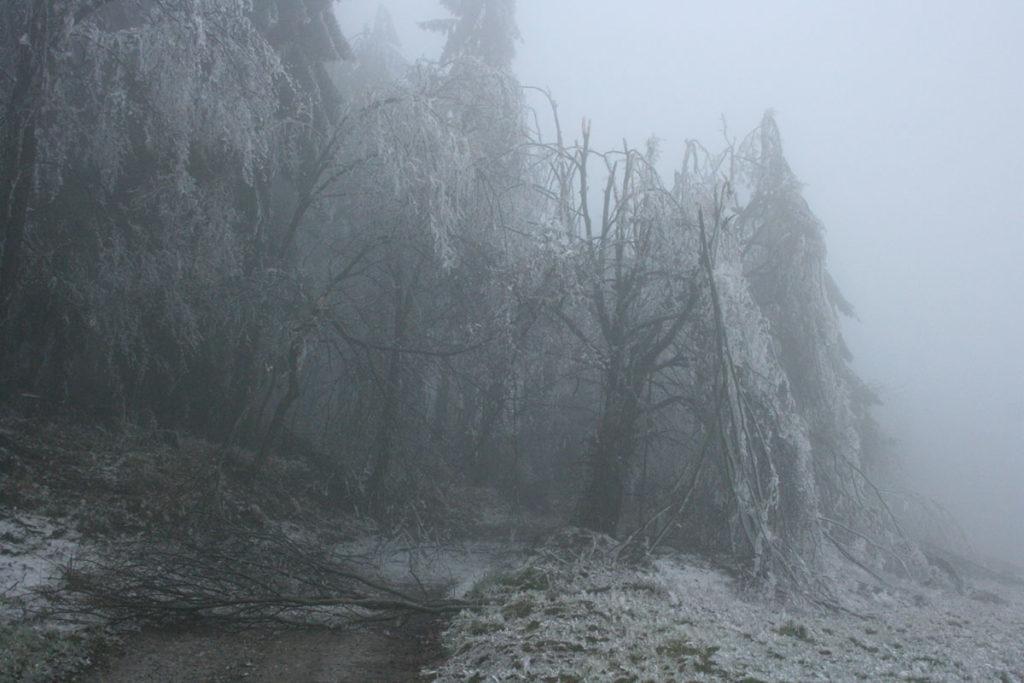 Bäume vom Eisbruch umgestürzt