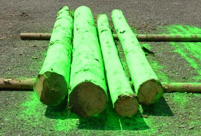 Grün markierte Baumstämme