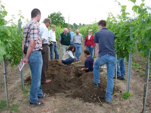 Mehrere Personen stehen im Weingarten