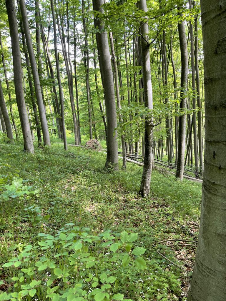 Generhaltungswald