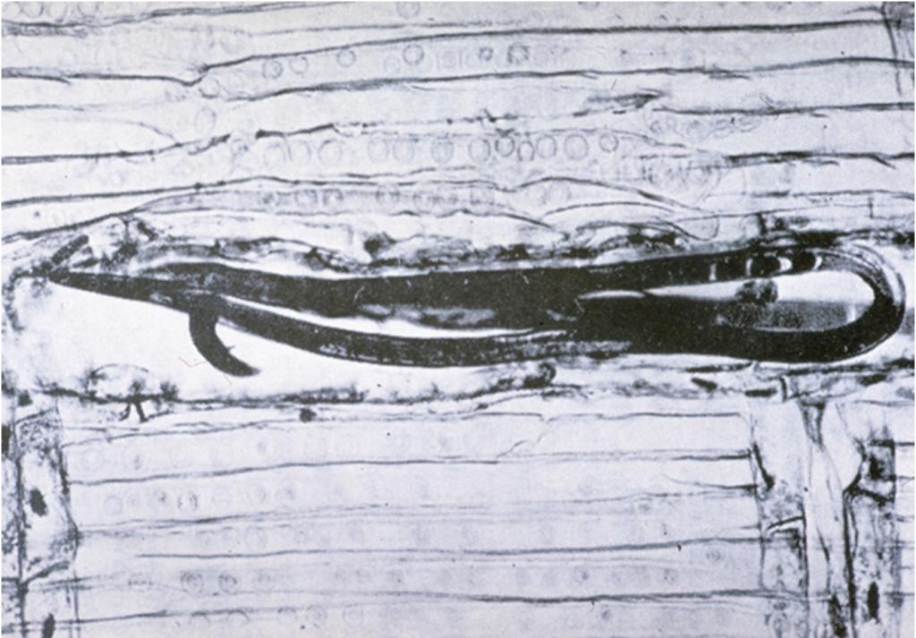 Kiefernholznematode