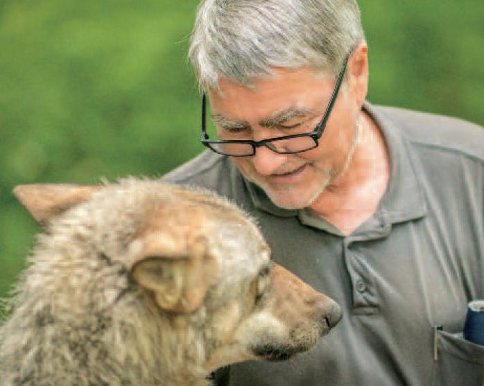 Kurt Kotrschal mit einem Gehegewolf