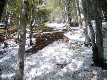 Schneelawine geht im Wald ab