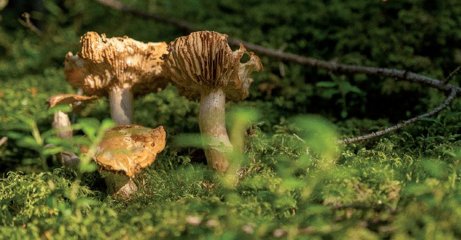 Pilz steht mitten im grünen Moos