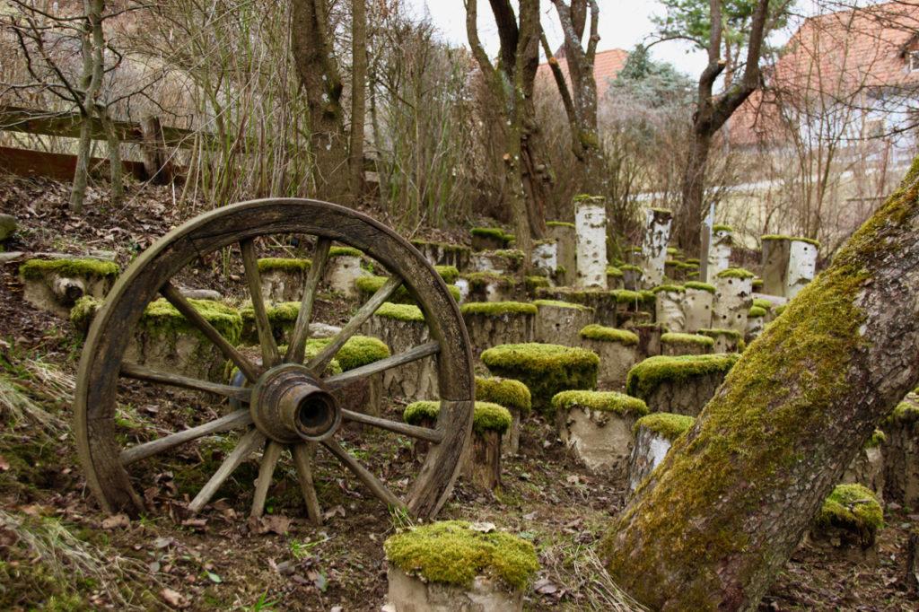 Waldviertler Pilzgarten: auf bemoosten Baumstämmen werden essbare Pilze gezüchtet