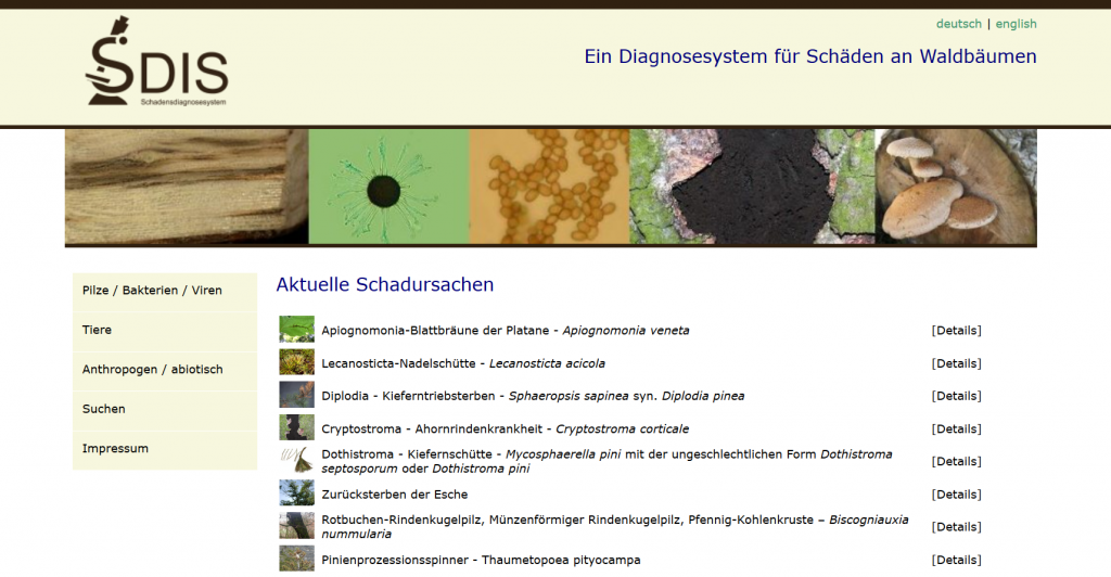 Screenshot des Online-Schadesdiagnosesystems