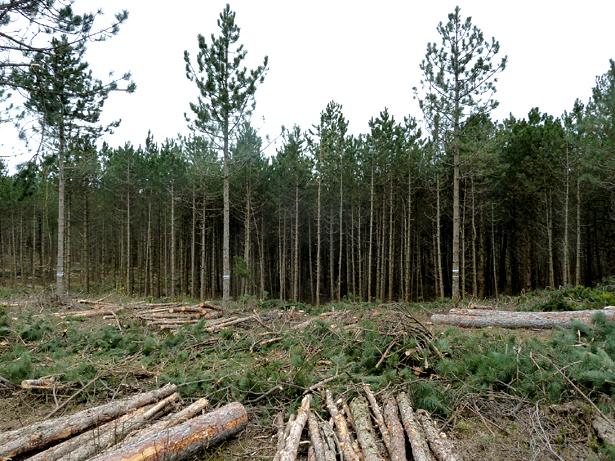 Test area in the Region Wienerwald